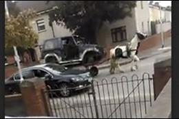El coche de un caballo
