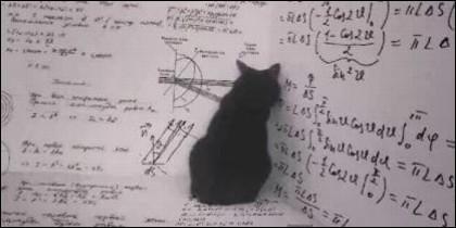 Gato de Schrödinger.