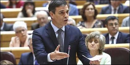 Pedro Sánchez en el Senado.