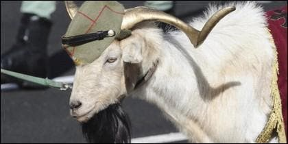 La cabra de la legión, que en realidad es un macho cabrío.