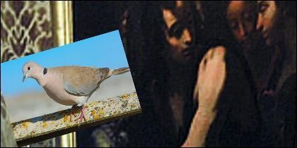 La paloma y la obra