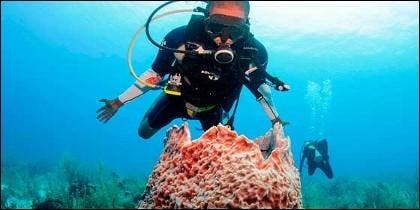 Barrera Coral de Belice