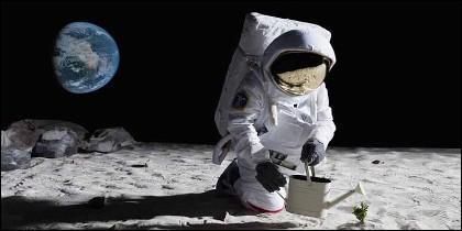 El cerebro de los astronautas se estrecha cuando están en el espacio exterior.