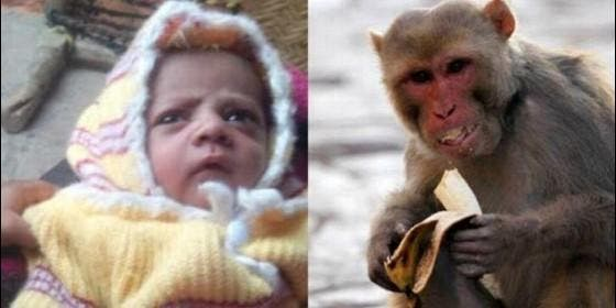 Un mono mata a un bebé de 12 días en India