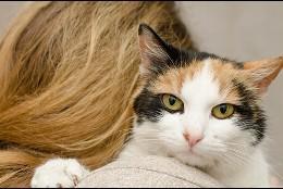 El gato y su dueña