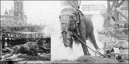 La electrocuicón y muerte de la elefanta Topsy.