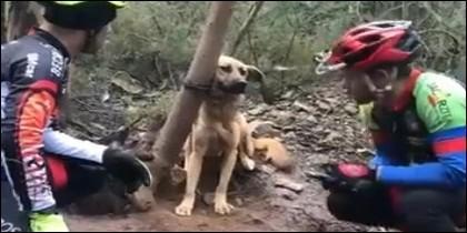 Los cilcistas encuentran al perro atado a un árbol y condenado a morir de hambre y sed.