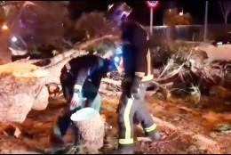 Los bomberos retirando el árbol caído