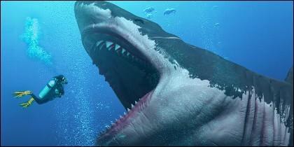 El Megalodón, el tiburón más grande todos los tiempos.