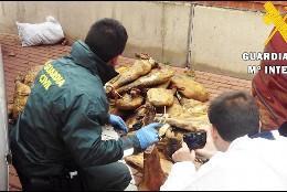 Imagen de la Guardia Civil con jamones requisados