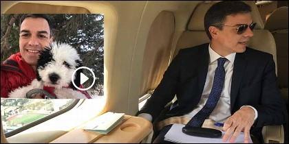 Pedro Sánchez en el avión Falcon con 'Turca', la perra de la familia.