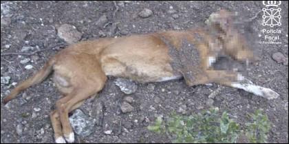 El perro muerto de un disparo 'porque no servía para cazar'.