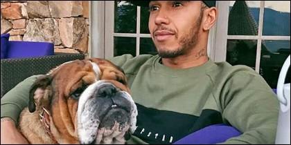 El perro y Lewis Hamilton