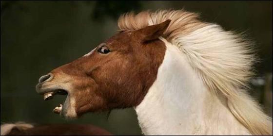 Un caballo aterrorizado.