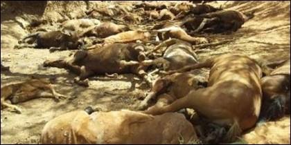 Caballos muertos