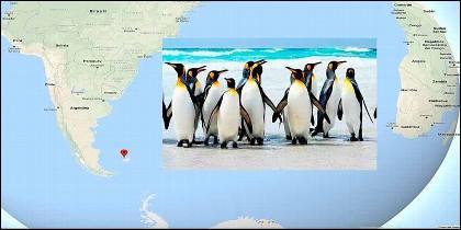 Los pingüinos de Pebbles Island.