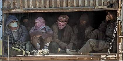 Terroristas yihadistas  del Estado Islámico tras rendirse a los kurdos en Baghouz.