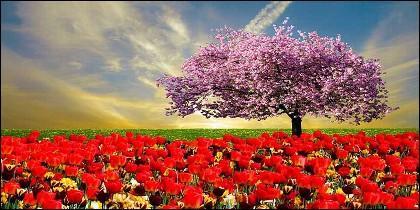 Flores, clima y primavera.