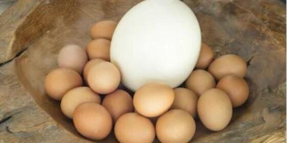 \huevos-4.jpg