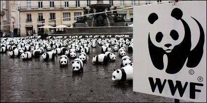 El logo a la ONG WWF.