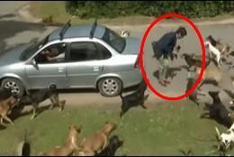 Así fue el terrible ataque de una jauría de perros a un periodista en directo