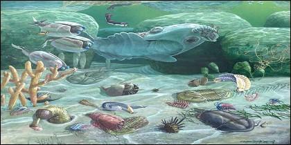 """Evolución, especies y la """"explosión del Cámbrico""""."""
