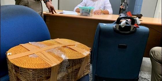 Indonesia: sujeto fue detenido por intentar robarse un orangután