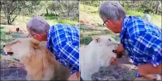Impactante video: acarició a una leona y casi pierde el brazo
