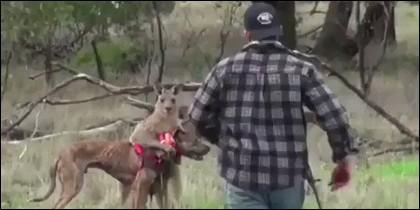 El hombre, el perro y el canguro