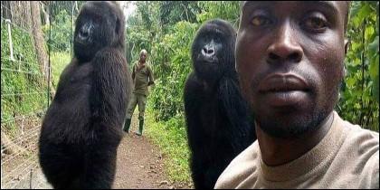 Los gorilas posan con su guardabosques.