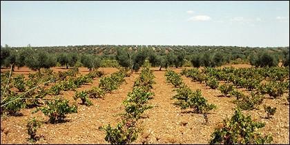 La entidad financiera impulsa la internacionalización y la innovación de las empresas vitivinícolas en FENAVIN.