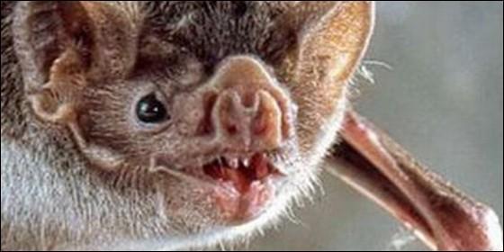 Murciélago escondido en funda de iPad contagia de rabia a anciano