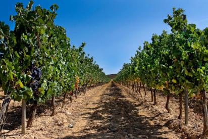 CLUNIA Tempranillo 2014 recibe 91 PUNTOS Wine Enthusiast