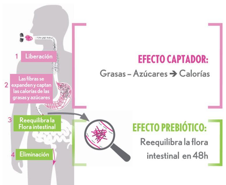 Oenobiol mecanismo deaccion