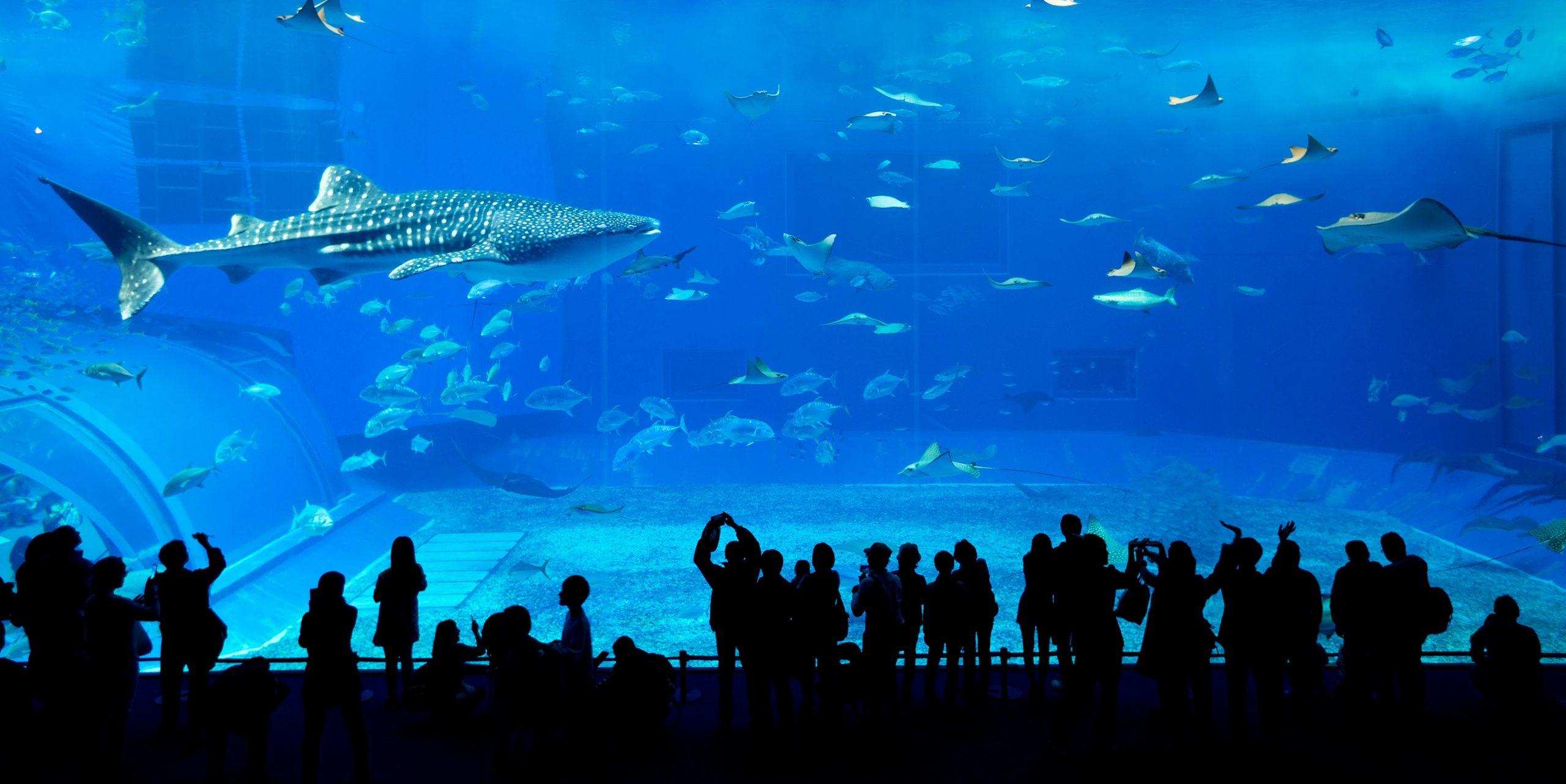 Dubai Aquarium