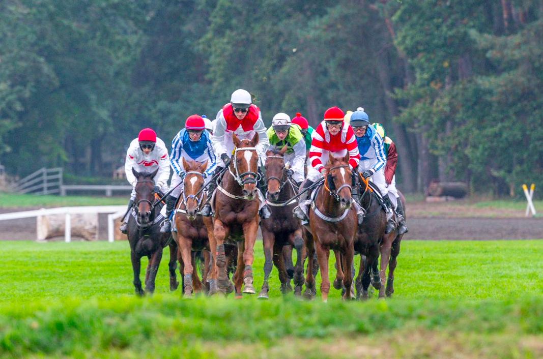 Chequia carreras caballos