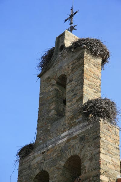 Cigüeñas, un trebol de cuatro... nidos