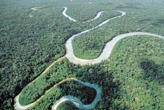 Un niño de 3 años sobrevive solo 12 días en la selva amazónica brasileña