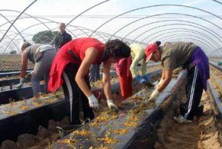 Empresarios piden más jornaleros rumanos para la cosecha de la fresa
