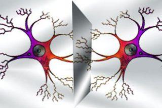 Autismo: ¿origen en las neuronas espejo?