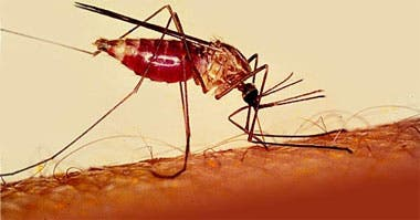Descubiertos nuevos compuestos activos para combatir la malaria