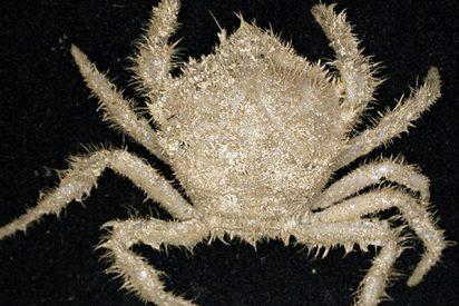 Aparecen más de 300 nuevas especies en el fondo marino de Tasmania