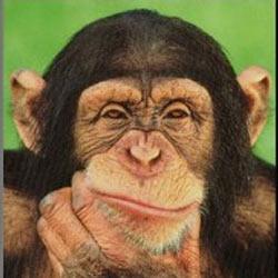 Los científicos consiguen una vacuna para el 'Sida de los simios'