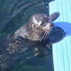 Nacen dos focas vitulinas en el Oceanogràfic de Valencia