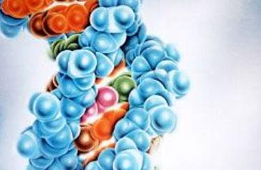 Cient ficos descubren tres nuevas secuencias del genoma humano for En 2003 se completo la secuenciacion del humano