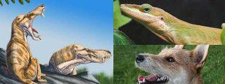 El pelo de los mamíferos tuvo su origen en los reptiles