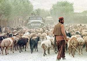 La OTAN confunde un rebaño de ovejas con un grupo de talibanes