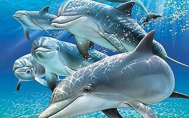 Mucho ruido y pocos delfines