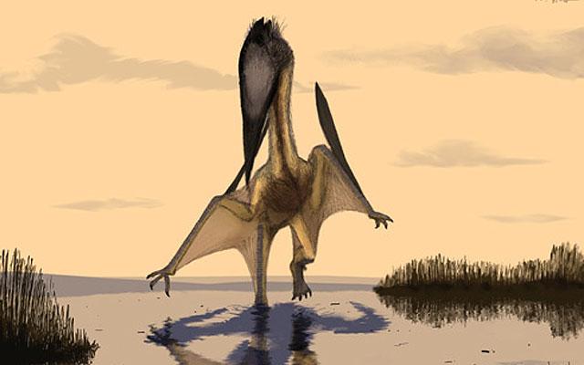 El emigrante marino que vivió hace 115 millones de años en Brasil