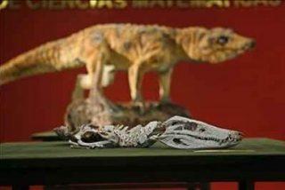 El eslabón perdido del cocodrilo tiene 80 millones de años